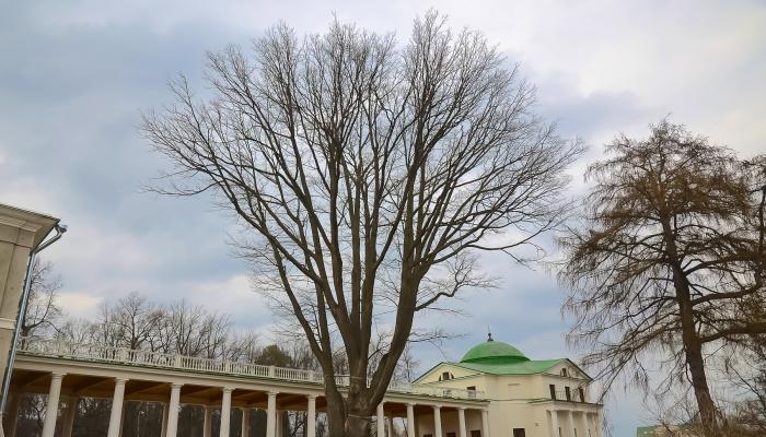 Подмосковные музеи будут открыты для бесплатного посещения 18 апреля