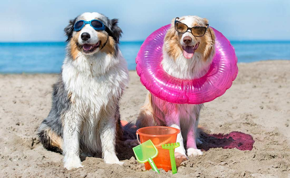 CR-Money-Inlinehero-cost-of-bringing-pets-on-vacation-0219