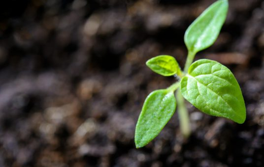 close-up-cultivation-environment-1002703